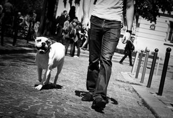 dressage chien 60